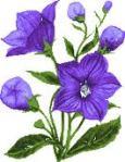 fleurmauve