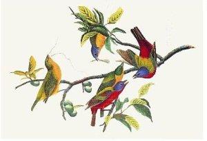 oiseauabandon