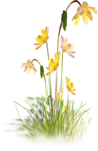 tube-fleur-jaune-png-R