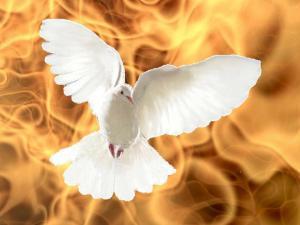 colombe-feu-de-lesprit.jpg