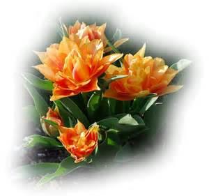 fleurorang