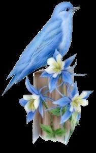 Oiseau-bleu