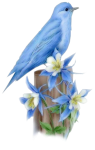 N'oublions pas nos chers anges-gardiens ! - Page 3 Oiseau-bleu