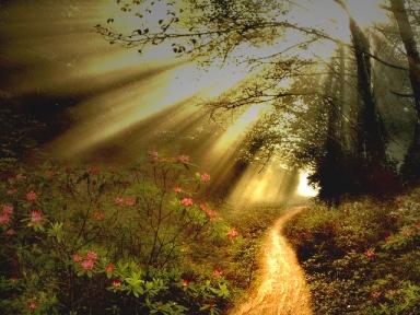 narrow-path-sun-rays-a1