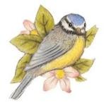 oiseau15