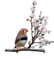 oiseaubranchs