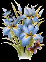 fleurbleugif1