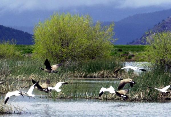 Wildlife Refuges Pesticides