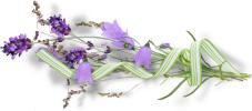 """Résultat de recherche d'images pour """"fleurs myriamir"""""""