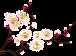 fleur0_3c809_ab675309_XL-jpg