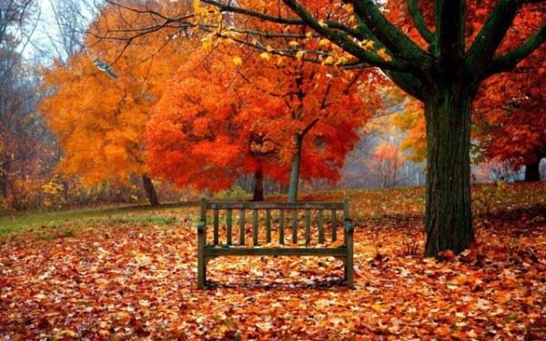 NATURE-automne