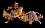 barre oiseau