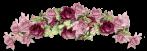 barre roses mauve