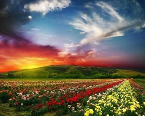 Le Ciel : Ultime récompense du chrétien ! Imaginez sa beauté ! Fleur