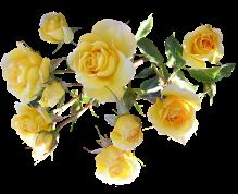 barre rose jaune