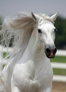 cheval-blanc-