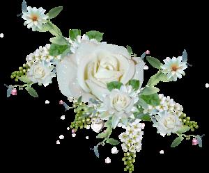 fleur-or-et-blanche