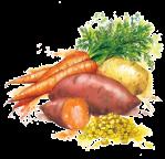 legumes-etoa