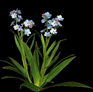 fleur bleu vert petite