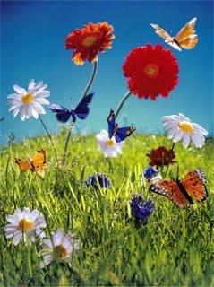 fleur accueil