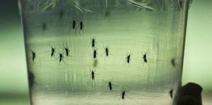 virus comme-la-dengue-et-le-chikungunya-ce-virus-zika-est_1756323_667x333