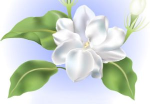 cropped-fleur-sampaguitad.jpg