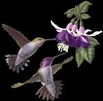 oiseau mauve