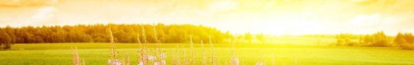 Enseignement ♥ simplifié ♥ sur la Divine Volonté  Cropped-fleur