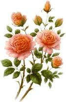 fleur peche