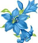 lys bleu2
