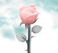 rose épines
