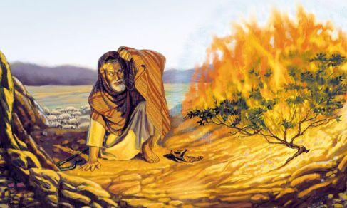 purification feu