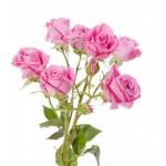 FLEUR rose-branchue-rose-10-tiges