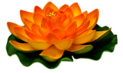 À quoi cela sert de toujours vouloir plus ? Plus de biens, d'argent, de plaisir, de santé, d'amis, de confort ! Fleur-lotus