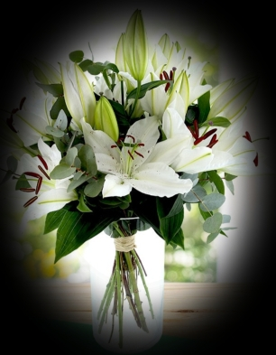 lys blanc jolie