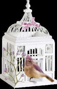 Oiseau-cage-ouverte