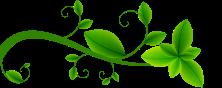 separation-plante