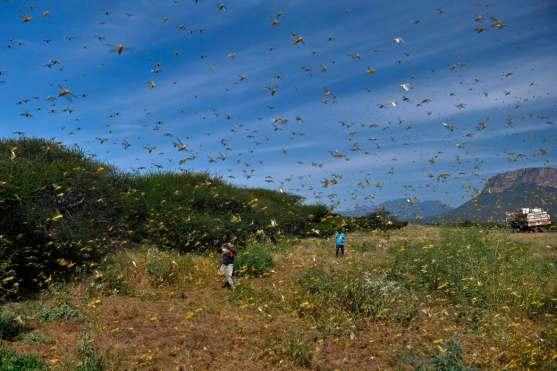 locusts-swarm-kenya