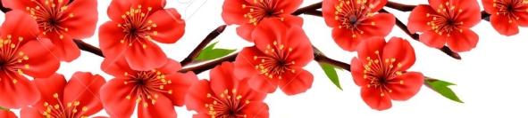36944962-spring-background-à-la-fleur-branche-de-fleurs-rouges-vecteur